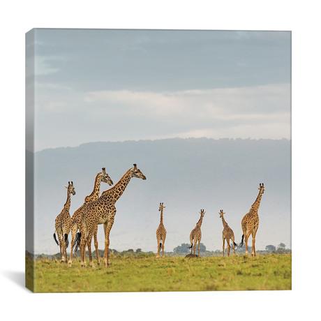 "Color Giraffe Herd I (12""W x 12""H x 0.75""D)"