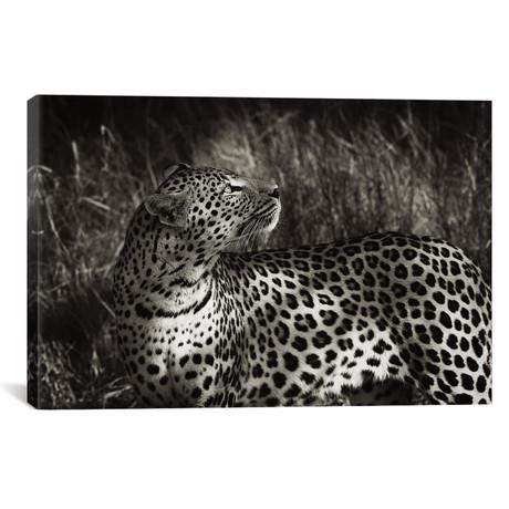"""B+W Leopard At Rest (18""""W x 12""""H x 0.75""""D)"""