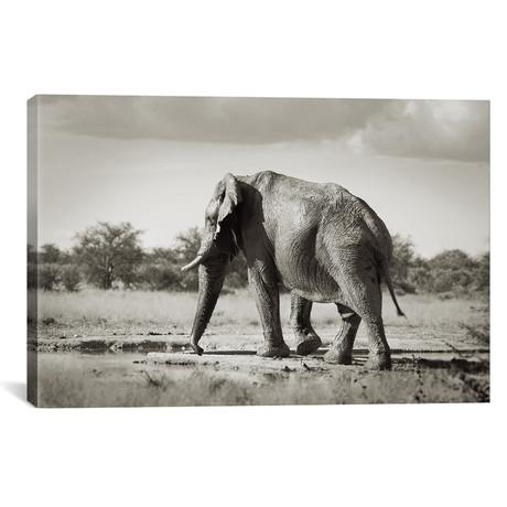 """B+W Solitary Elephant (18""""W x 12""""H x 0.75""""D)"""