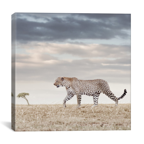"""Color Leopard (12""""W x 12""""H x 0.75""""D)"""