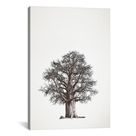 "Baobab Legacy II (12""W x 18""H x 0.75""D)"