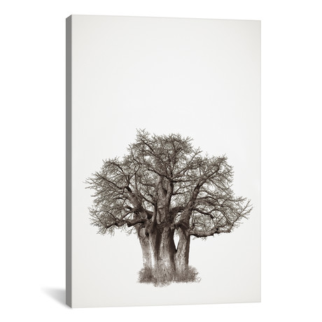 "Baobab Legacy III (12""W x 18""H x 0.75""D)"