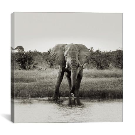 """B+W Elephant Drinking (12""""W x 12""""H x 0.75""""D)"""
