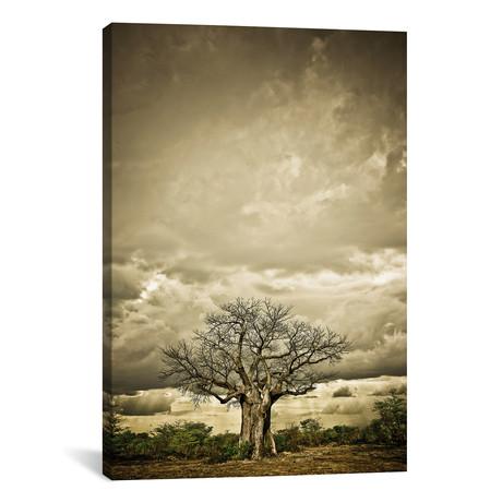"""Baobab Hierarchy IV (12""""W x 18""""H x 0.75""""D)"""