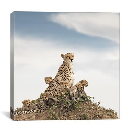 """Color Cheetah + Cubs // II (12""""W x 12""""H x 0.75""""D)"""