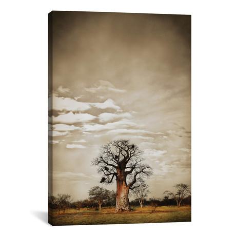"""Baobab Hierarchy V (12""""W x 18""""H x 0.75""""D)"""