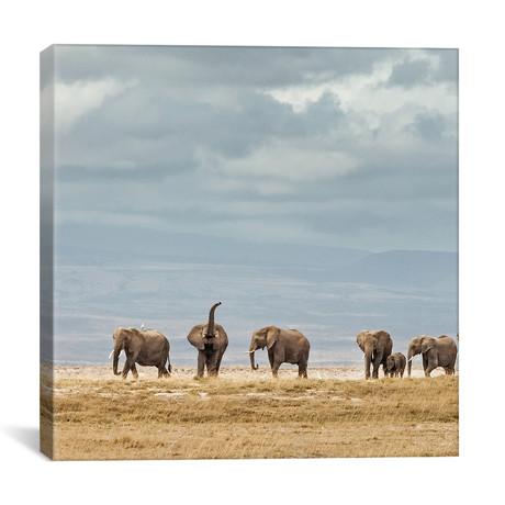 "Color Elephant Herd // II (12""W x 12""H x 0.75""D)"