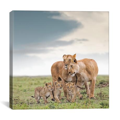 """Color Lioness + Cubs // I (12""""W x 12""""H x 0.75""""D)"""
