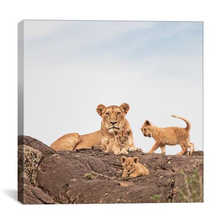 """Color Lioness + Cubs // II (12""""W x 12""""H x 0.75""""D)"""
