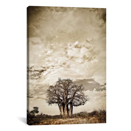 """Baobab Hierarchy III (12""""W x 18""""H x 0.75""""D)"""