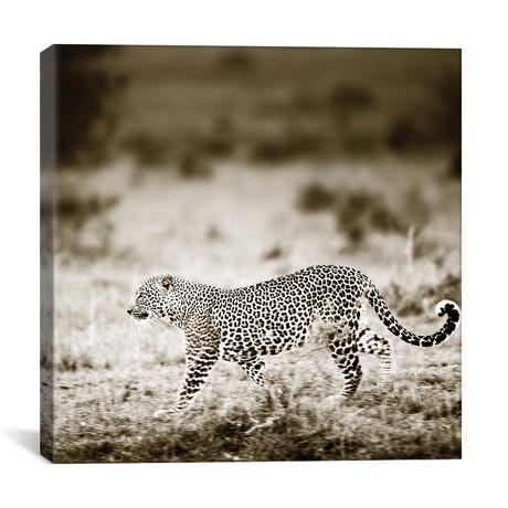 """Approaching Leopard (12""""W x 12""""H x 0.75""""D)"""
