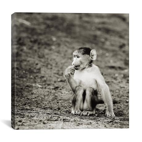 "B+W Cheekey Monkey (12""W x 12""H x 0.75""D)"