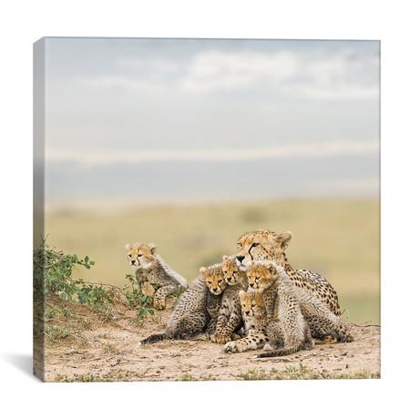 """Color Cheetah + Cubs // III (12""""W x 12""""H x 0.75""""D)"""