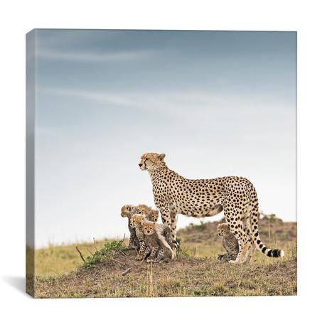 """Color Cheetah + Cubs // I (12""""W x 12""""H x 0.75""""D)"""