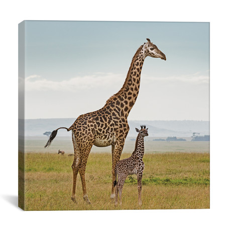 "Color Giraffe + Calf (12""W x 12""H x 0.75""D)"