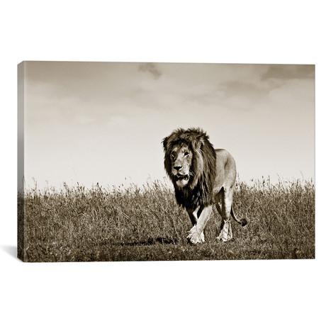 "Purposeful Lion (18""W x 12""H x 0.75""D)"