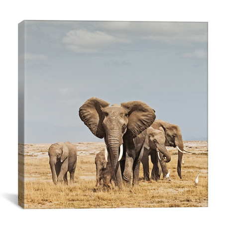 "Color Elephant Herd // I (12""W x 12""H x 0.75""D)"