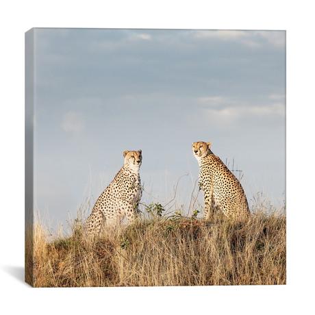 """Color Cheetah Duo // I (12""""W x 12""""H x 0.75""""D)"""