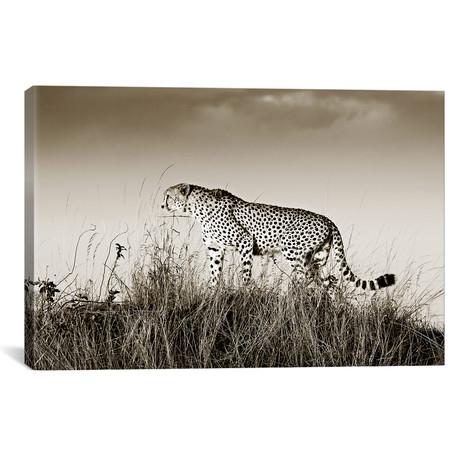 """Crouching Cheetah (18""""W x 12""""H x 0.75""""D)"""
