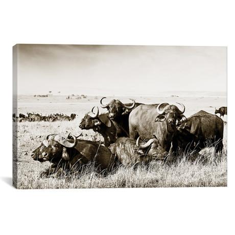 "Allied Buffaloes (18""W x 12""H x 0.75""D)"