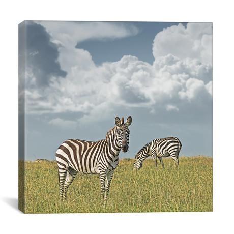 """Color Zebra Duo (12""""W x 12""""H x 0.75""""D)"""