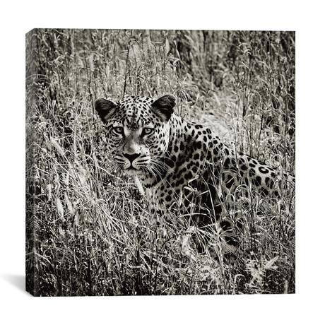 """B+W Elusive Leopard (12""""W x 12""""H x 0.75""""D)"""