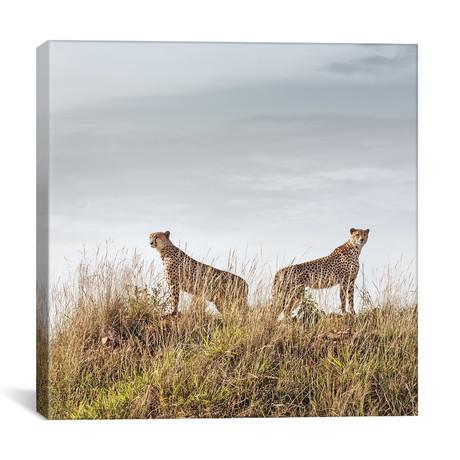 """Color Cheetah Duo // II (12""""W x 12""""H x 0.75""""D)"""