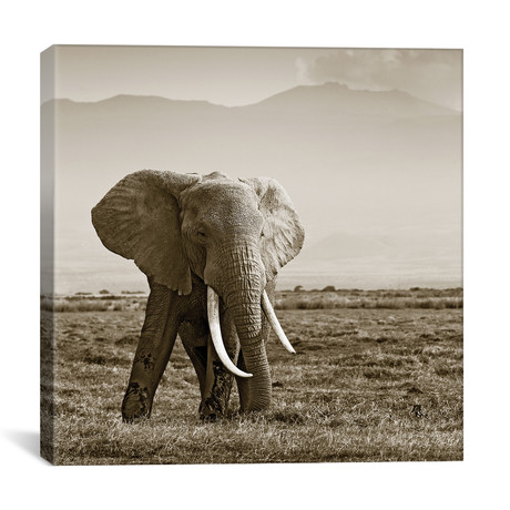 "Big Tusked Elephant (12""W x 12""H x 0.75""D)"