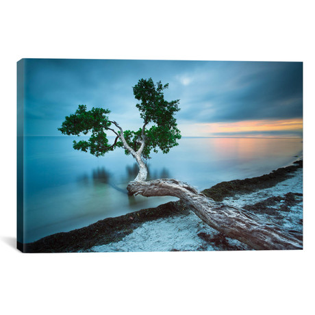 "Water Tree 10 Color // Moises Levy Canvas Print (26""W x 18""H x 0.75""D)"