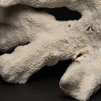 Genuine White Cat's Paw Coral // III