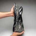 Genuine Orthoceras Fossil Sculpture