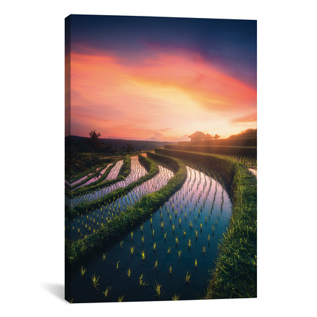 "Rice Fields I - Bali - Indonesia // Cuma Cevik (12""W x 18""H x 0.75""D)"