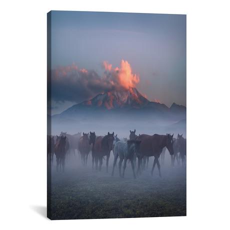 Wild Horses IV - Cappadocia - Turkey