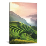 "Rice Fields I - North Vietnam // Cuma Cevik (12""W x 18""H x 0.75""D)"