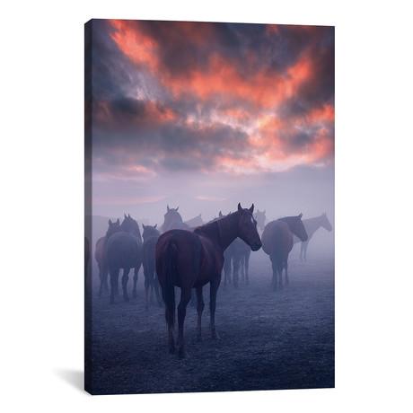 Wild Horses I - Cappadocia - Turkey