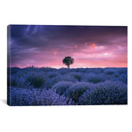 """Lavenders - Isparta - Turkey (18""""W x 12""""H x 0.75""""D)"""