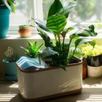 Dew Planter