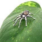 Precious Gem Spider Pendant // Solid Sterling Silver + Smoky Quartz