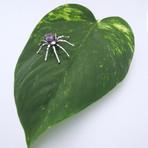 Precious Gem Spider Pendant // Solid Sterling Silver + Dark Amethyst