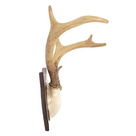 Contemporary Deer Antlers Wall Art