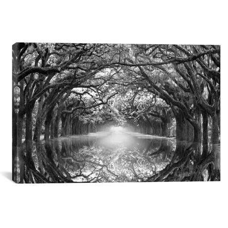 "Oak Alley Reflection // Danita Delimont (18""W x 12""H x 0.75""D)"