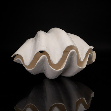 "Genuine Giant Clam // 12"" Pair"