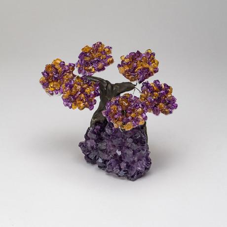 The Harmony Tree // Genuine Citrine + Amethyst Tree On Amethyst Matrix // Small