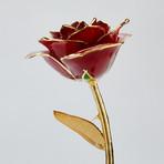 Holiday Rose