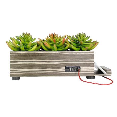 PowerPlant Succulent Charging Station // Zebra Wood