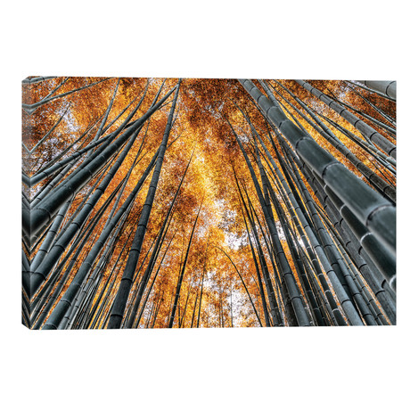 """Kyoto Bamboo Forest II // Philippe Hugonnard (18""""W x 12""""H x 0.75""""D)"""