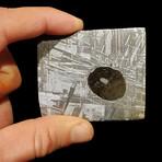 Muonionalusta Meteorite Slice with Triolite