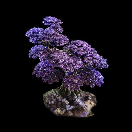 Tree of Serenity - Amethyst Petals on an Amethyst Matrix // Large