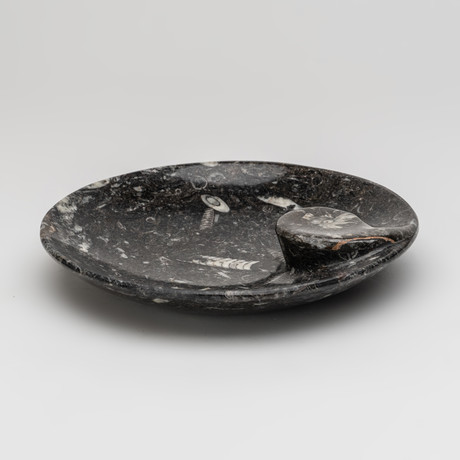 Round Ammonite and Goniatite Fossil Dish // Medium