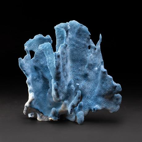 Blue Ridge Coral v.1